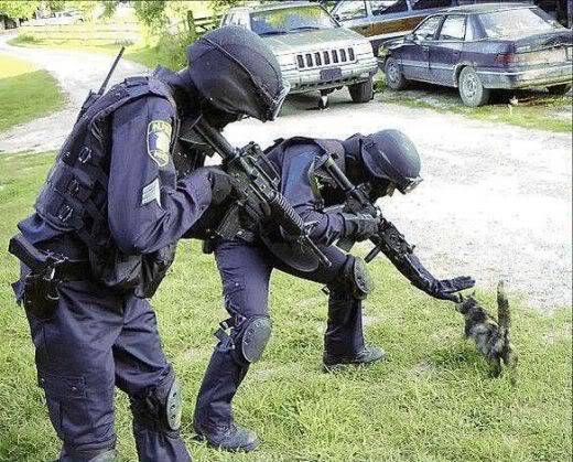 Imagenes Graciosas!!  =)) - Página 6 Owned_cat_swat