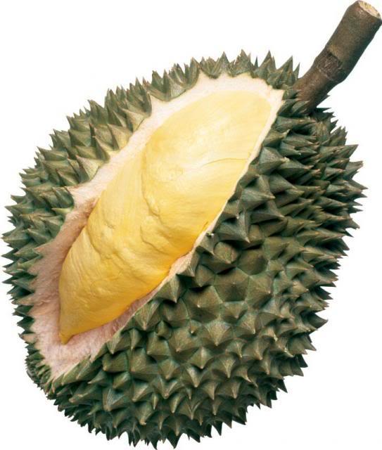 KÍNH THƯA THẦY! Green-durian_zpsad1935b4