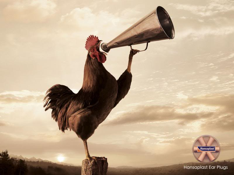 Random Pic - Page 3 Rooster_zps533b80b5