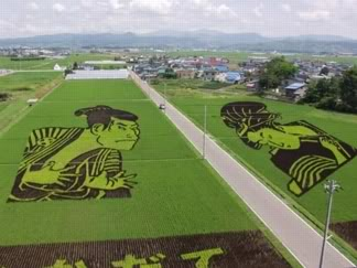 Rice Paddy Art  2005rice
