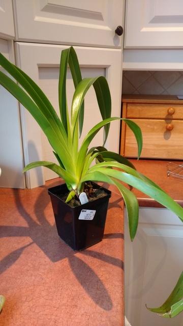 Orchidées chez lavandula - Page 5 IMG_20170329_080817506_zpsmh5vb1nv