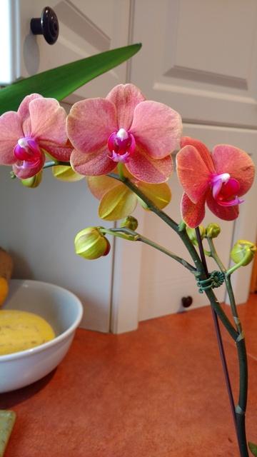 Orchidées chez lavandula - Page 5 IMG_20170329_083601011_zpssmp8zix9