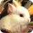 [Empleado] [Kellen Stehentod]  Bunny-rabbit-puzzlebox-100