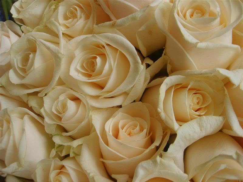 Fotografije cvijeća - Page 39 S5005282Medium