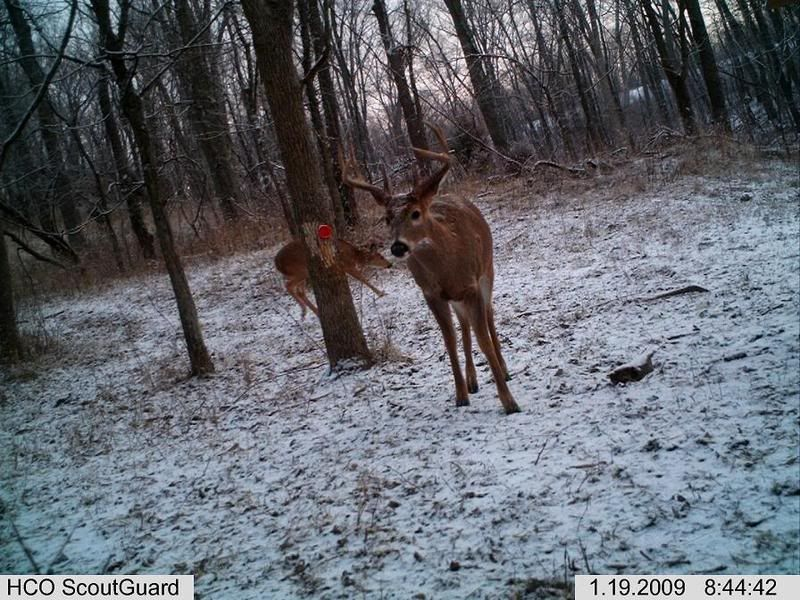 Show your target buck IM000598