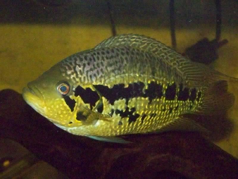 Cambio de peces 100_4309