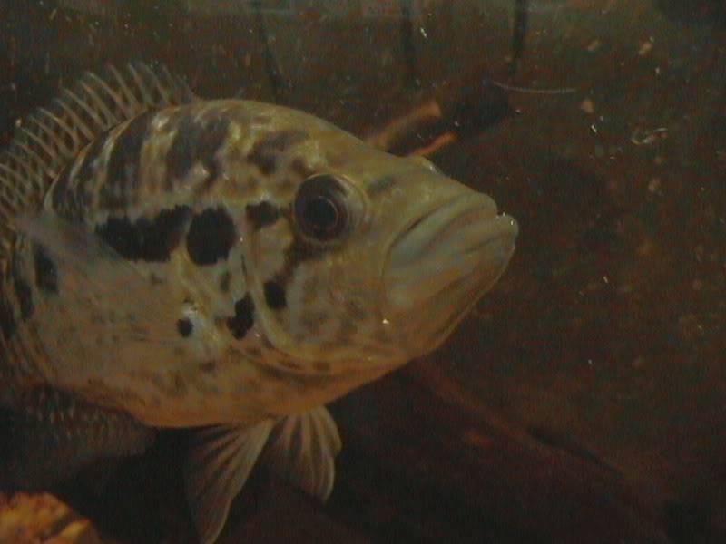 Cambio de peces DCAM0012