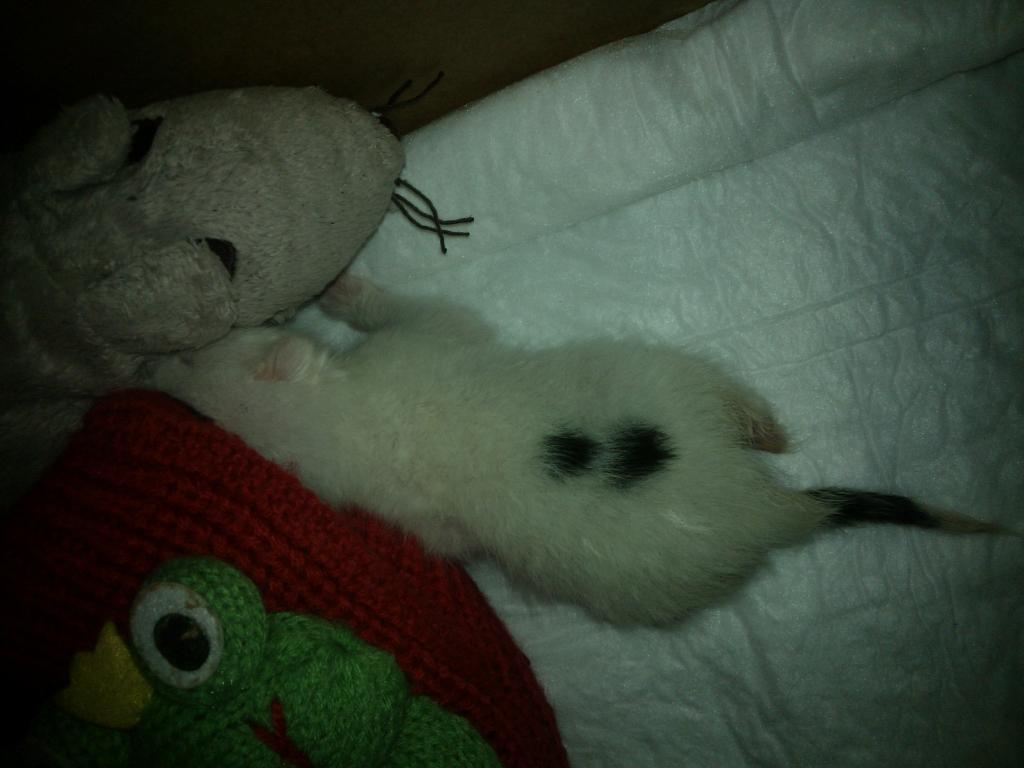 3 αδεσποτα,θα τα κοιμησουν ως τη Δευτερα!ΣΟΣ!!! - Σελίδα 4 WP_001957