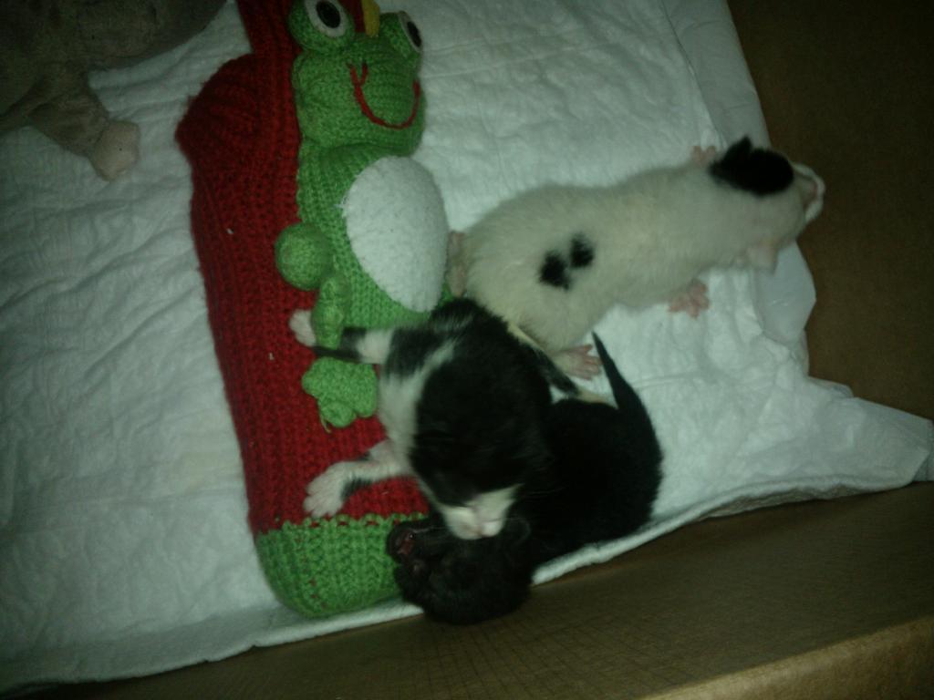 3 αδεσποτα,θα τα κοιμησουν ως τη Δευτερα!ΣΟΣ!!! WP_001969