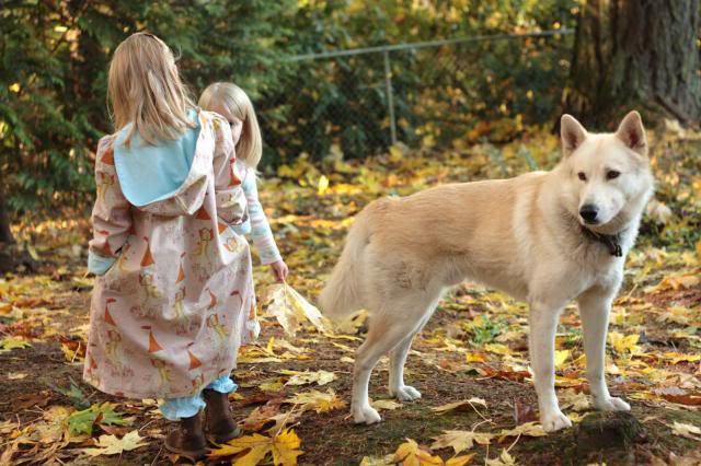 Wolf-Dogs and their Pups Update *12/12* 099-4