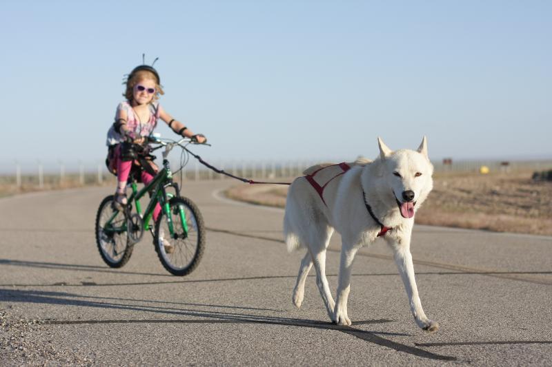 Finally, I have pics of all 4 dogs (2 Huskies + 2 GSDs) bikejoring together! 14314978227_e9a6f2ea8e_o-1