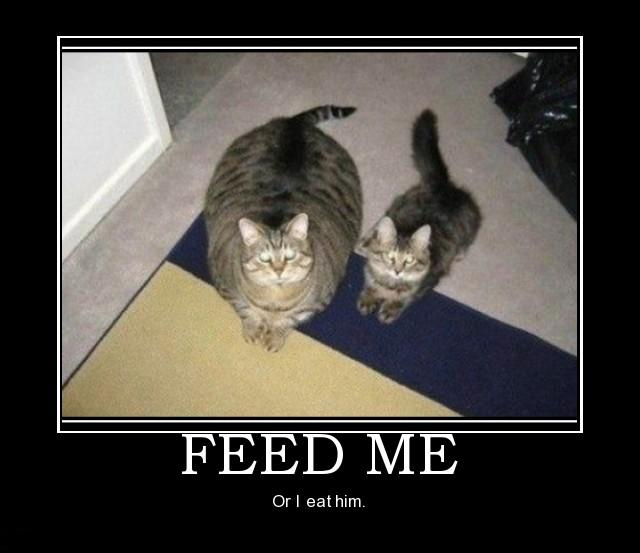 Funny Pictures - Page 4 Feed-me-fat-cat-demotivational-posters-1327560778