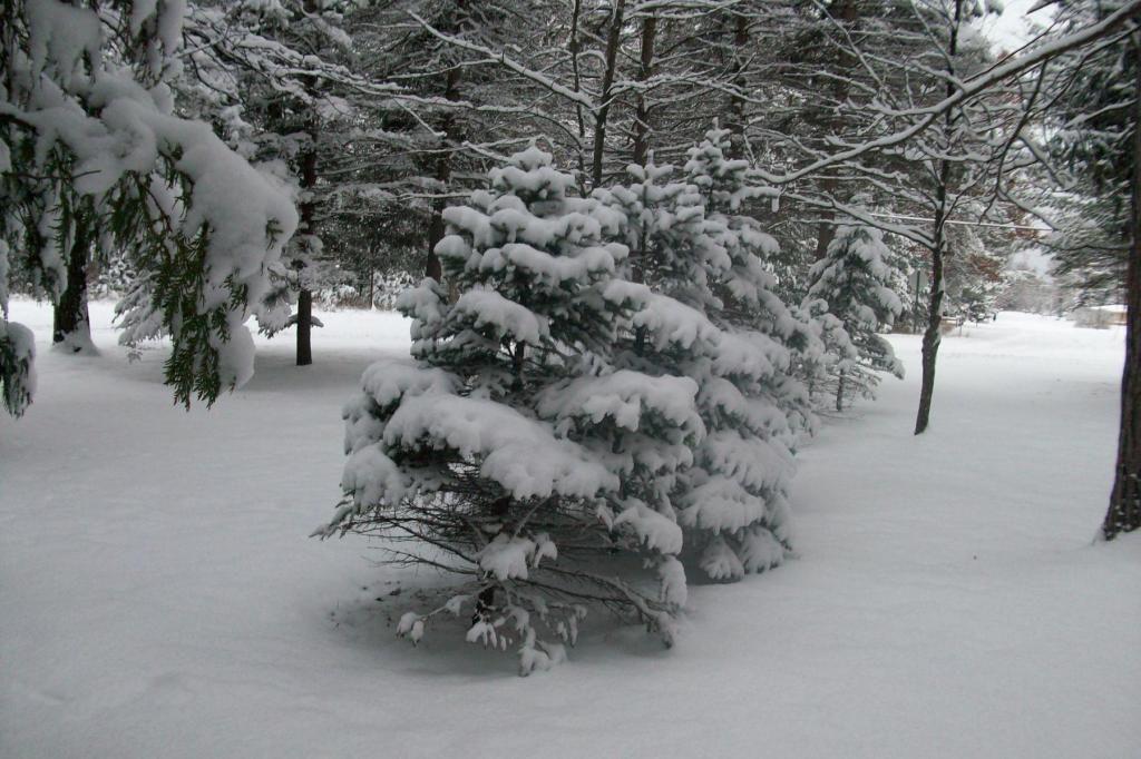 SNOW! - Page 12 005_zps73f466a8