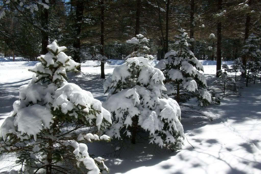 SNOW! - Page 5 BlizzardMar2820114