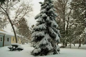 Winter photos Eunice_yard