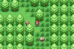 Pokemon Whitefog PrimstedForest