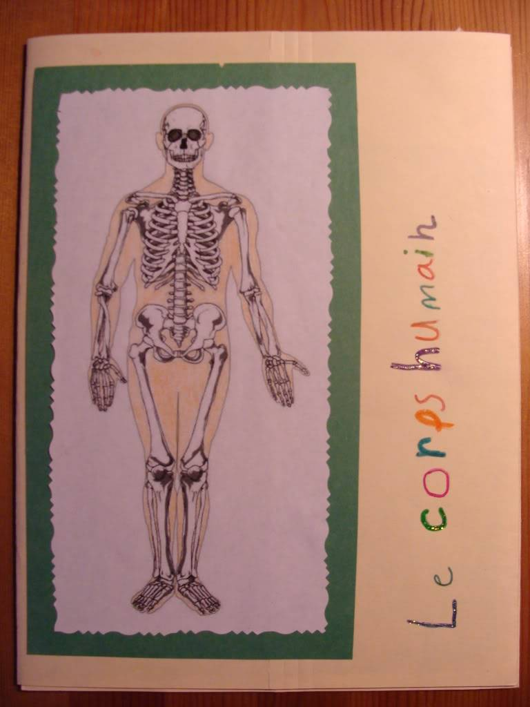 Anatomie et articulations du corps humain. Picture016