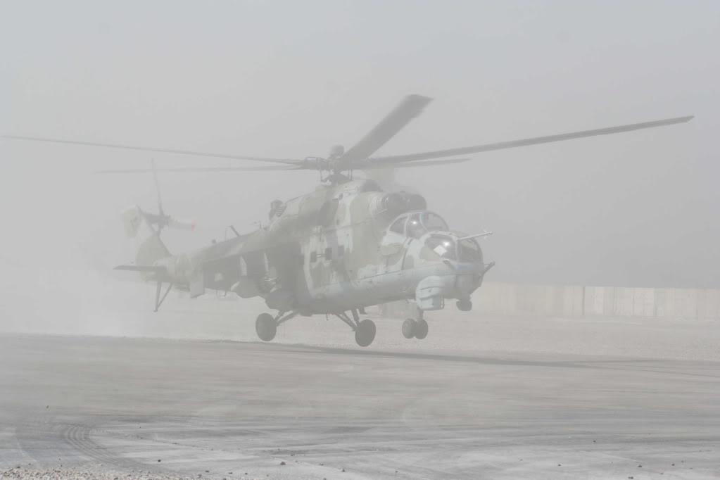 Polish Birds in Iraq Hind2