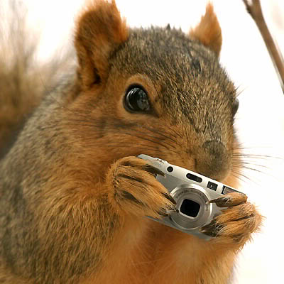 Practice Here! - Page 2 Squirrel_Shoots_Back