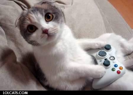 又可愛又爆笑的貓貓圖 Lolcatsdotcom4ggqthu840xxxwye