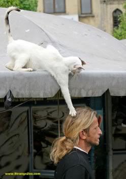 又可愛又爆笑的貓貓圖 Lolcatsdotcom8szim43ew72eus9w