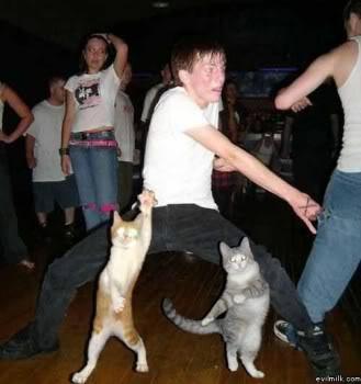 又可愛又爆笑的貓貓圖 Lolcatsdotcommb90fshu6498rpl2