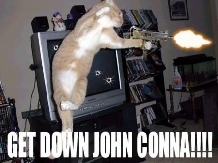 又可愛又爆笑的貓貓圖 Lolcatsdotcomn5fthjvid3rbt8wn
