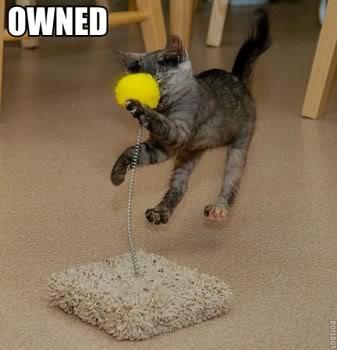 又可愛又爆笑的貓貓圖 Lolcatsdotcomug9elgxemb1avrt1