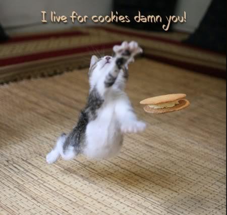又可愛又爆笑的貓貓圖 Lolcatsdotcomwx0ibjk95d4l1ejg
