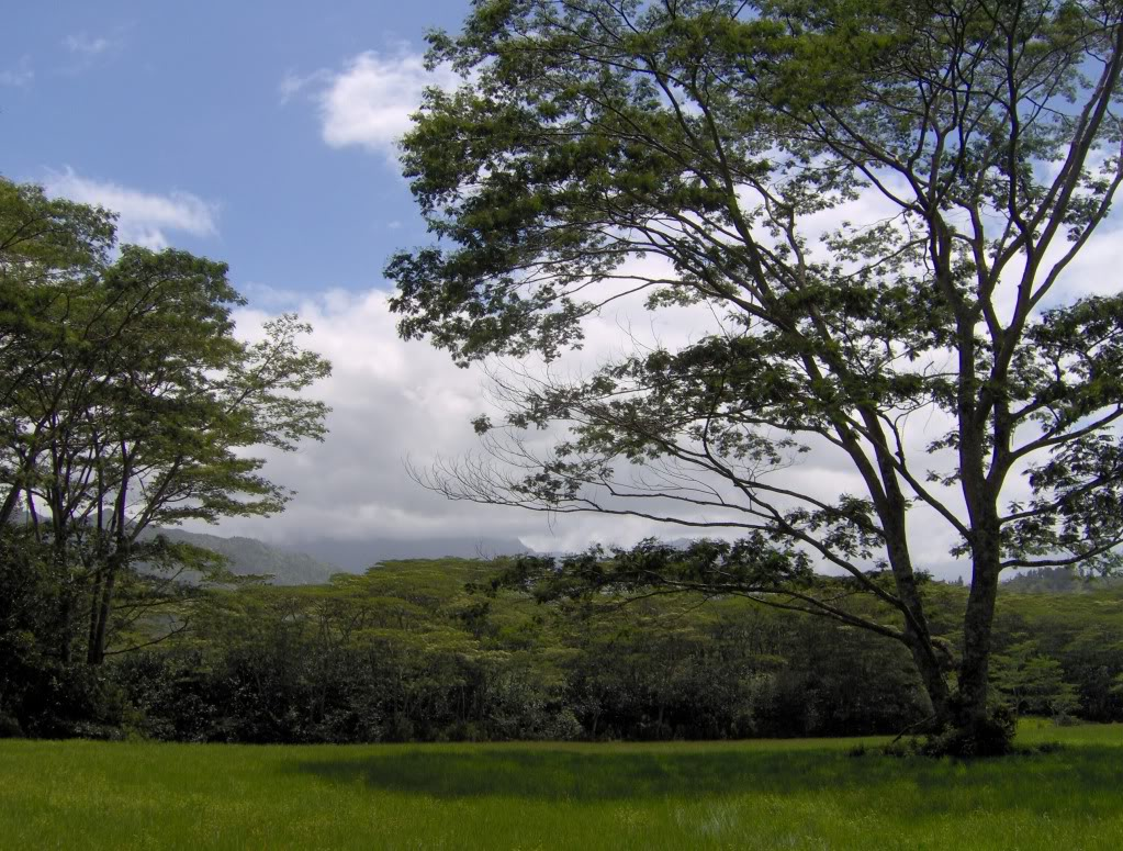 Jurassic Park Franchise Filming Locations!  HPIM1349