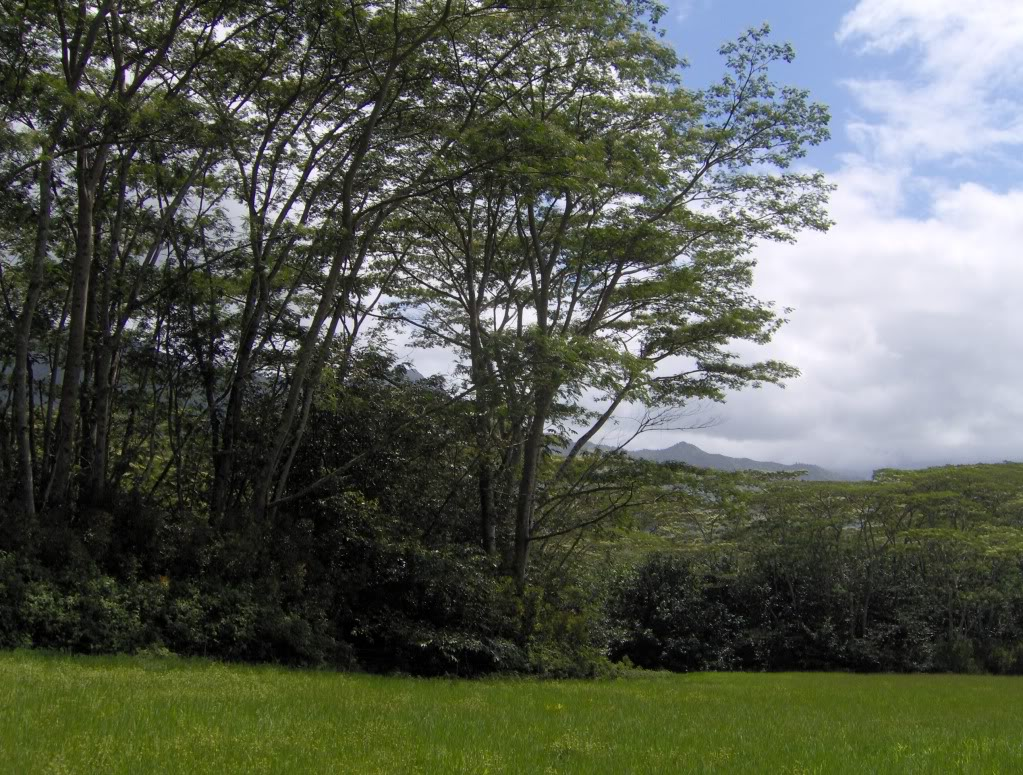Jurassic Park Franchise Filming Locations!  HPIM1351