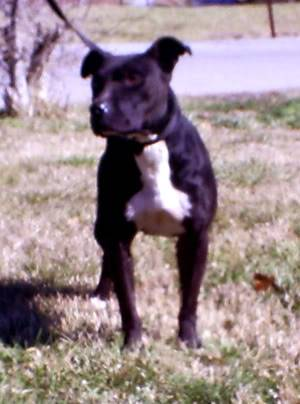 March dog of the month!!!!!!! Picture012