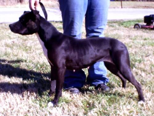 March dog of the month!!!!!!! Picture013