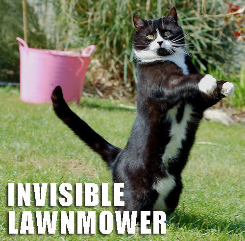 Post LOLcats here - Page 2 Funnyanimal11