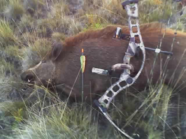 BOWHUNTING PIC GALLERY.......... - Page 5 10-25-08_0646