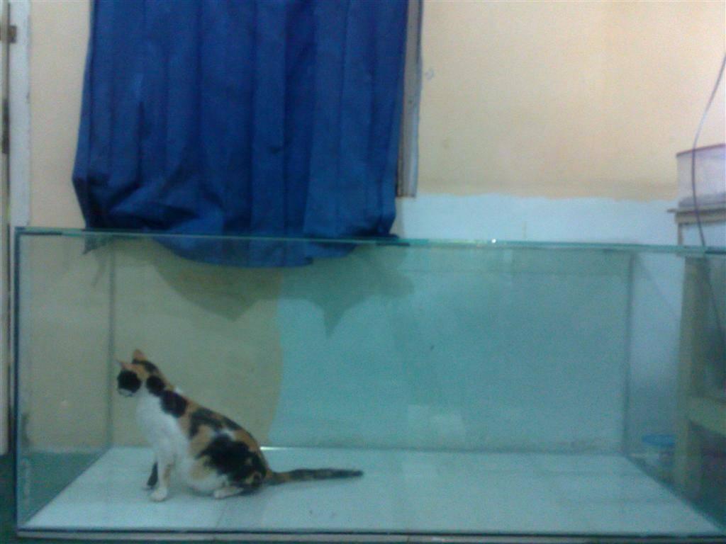 Fishkeeping in Indonesia Aquarium150x60x60Cm3