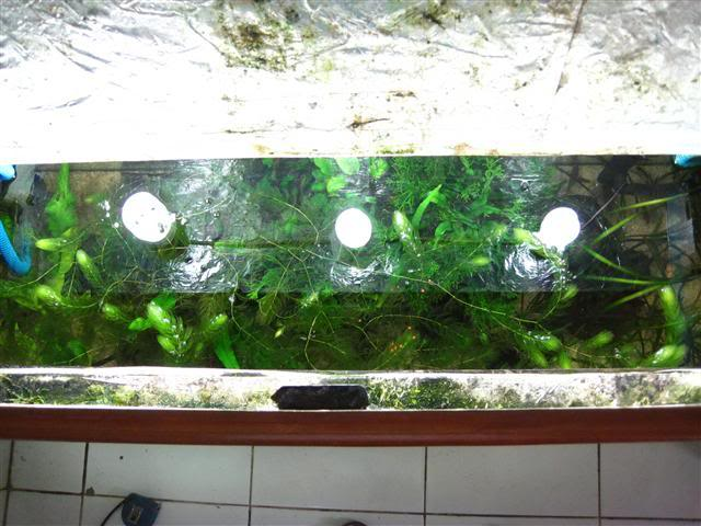 Introduction Aquariums DriftingRiverLogTV6-1