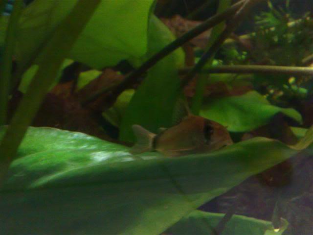 Introduction Aquariums FiodePrisa005