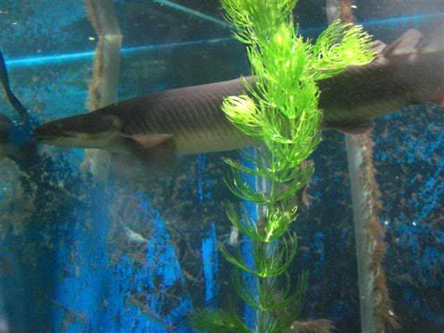 Introduction Aquariums Goby
