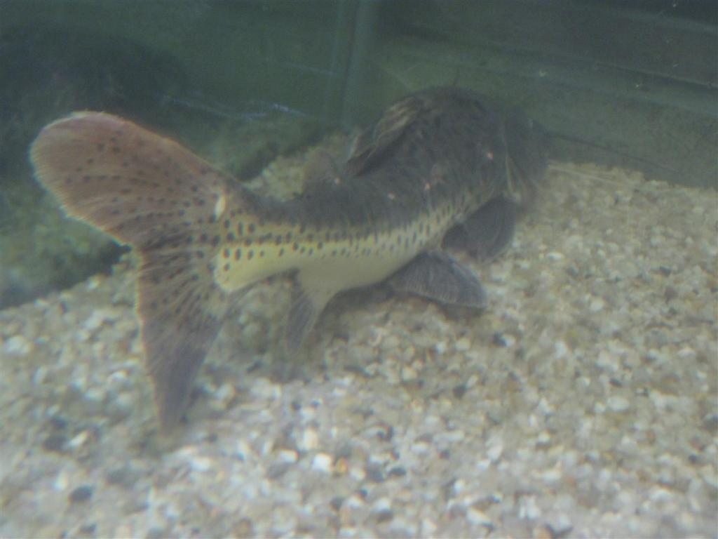 213x100x70,4 Tank GrazedTSNxRTCCatfish2