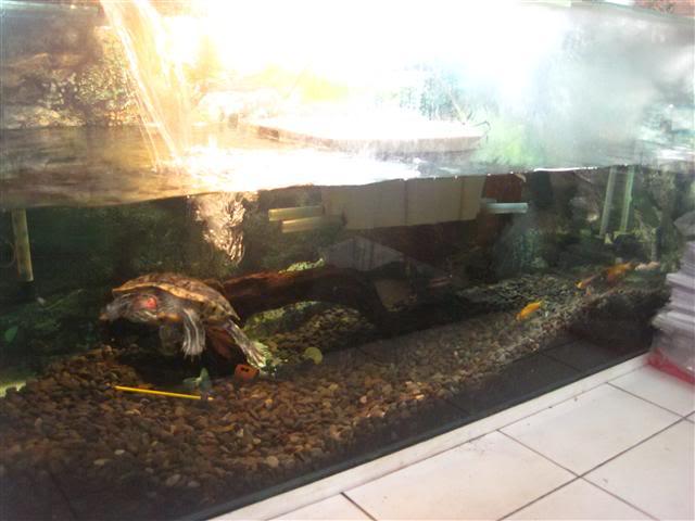 Introduction Aquariums HerbicheloniaTankFV6-1