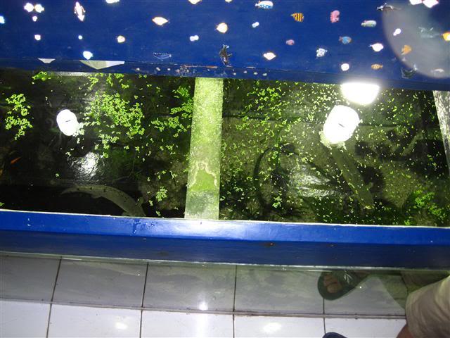 Introduction Aquariums PolypterusTankTV5-1
