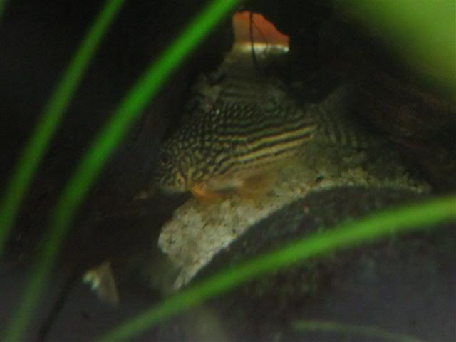 Introduction Aquariums RacioEncazer