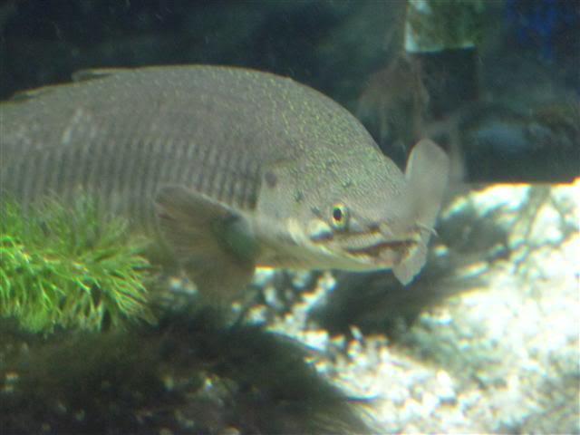 Introduction Aquariums Sento