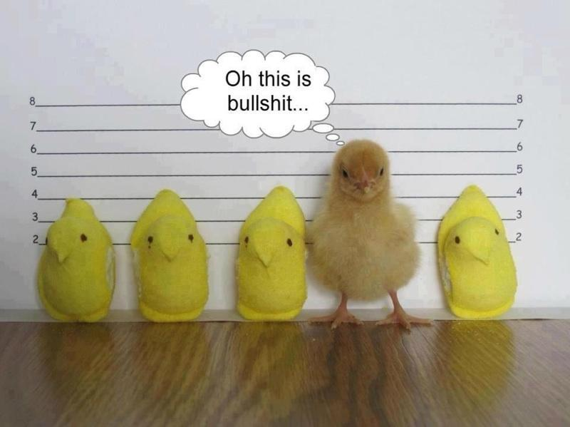 Funny Pictures... - Page 10 IMG951804_zps5881aaf1