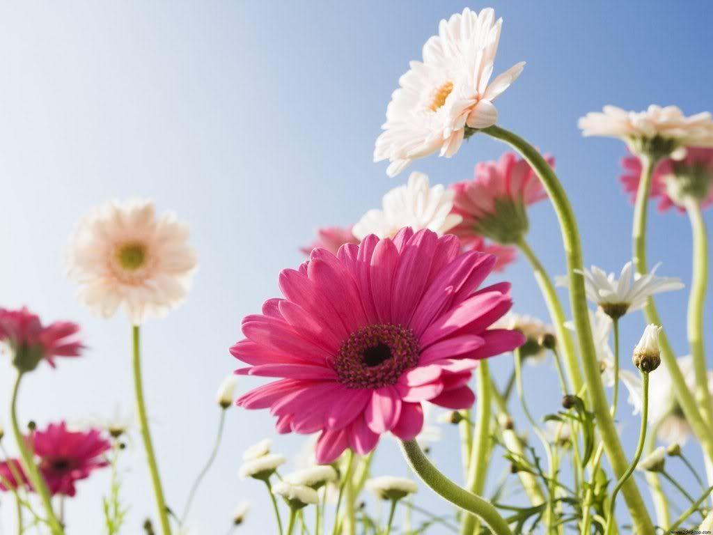 நான் ரசித்த மலர்கள் சில... - Page 2 Blue_Sky_and_Flowers