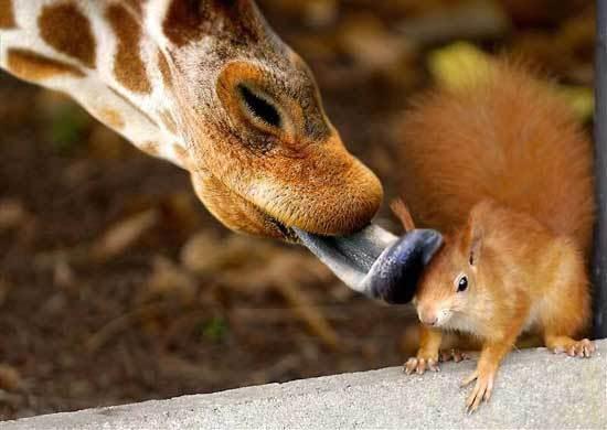 Funny animals Baby_animals_163