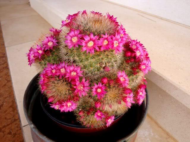 Kaktusi - Page 2 DSC02513