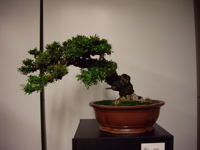 Photos of 6th World Bonsai Convention in PR IMGP6103_resize