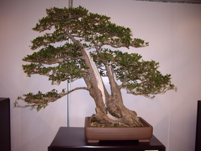 Photos of 6th World Bonsai Convention in PR IMGP6109_resize